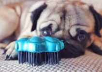 Dog Brush For Pugs