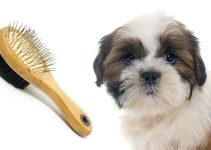 5 Best Dog Brushes for Shih Tzus (Reviews Updated 2021)
