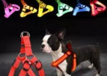 5 Best Dog Collars for Boston Terriers (Reviews Updated 2021)