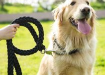 5 Best Dog Collars for Golden Retrievers (Reviews Updated 2021)