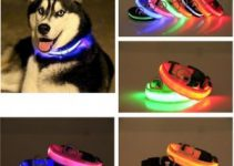 5 Best Dog Collars for Huskies (Reviews Updated 2021)