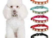 5 Best Dog Collars for Poodles (Reviews Updated 2021)