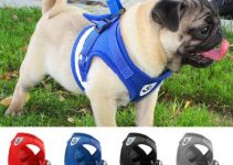 5 Best Dog Collars for Pugs (Reviews Updated 2021)