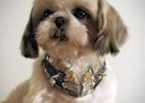 Dog Collar For Shih Tzus