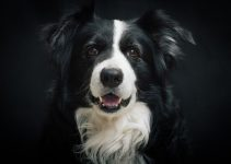 5 Best Dog Crates for Border Collies (Reviews Updated 2021)