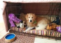 5 Best Dog Crates for Golden Retrievers (Reviews Updated 2021)