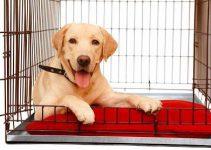 5 Best Dog Crates for Labrador Retrievers (Reviews Updated 2021)