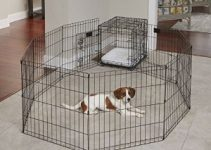 5 Best Dog Crates for Pomeranians (Reviews Updated 2021)