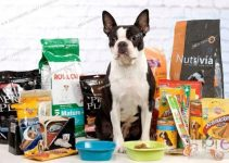 5 Best Dog Foods for Boston Terriers (Reviews Updated 2021)