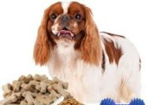 5 Best Dog Foods for English Toy Spaniels (Reviews Updated 2021)