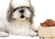 Dog Food For Shih Tzus (2)
