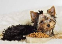 Dog Food For Toy Breeds