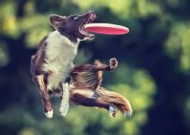 5 Best Dog Frisbees (Reviews Updated 2021)