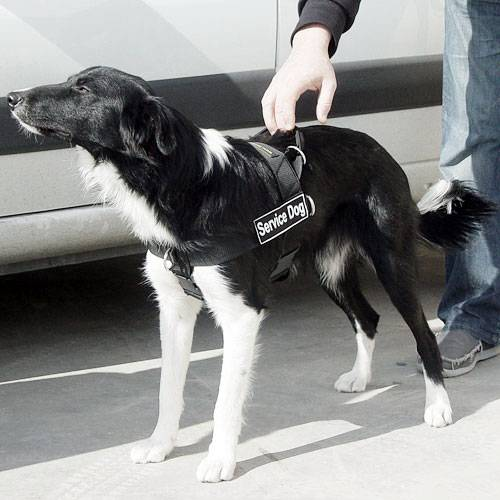 5 Best Dog Harnesses For Border Collies  Reviews Updated