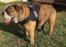 5 Best Dog Harnesses for Bulldogs (Reviews Updated 2021)