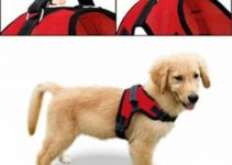 Dog Harness For Chow Chows
