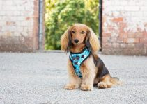 Dog Harness For Cocker Spaniels