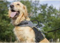Dog Harness For Golden Retrievers