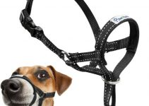 Dog Head Halter