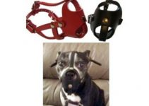 Dog Muzzle For Boston Terriers