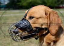 Dog Muzzle For Golden Retrievers