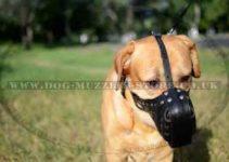Dog Muzzle For Labrador Retrievers