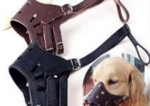 5 Best Dog Muzzles for Yorkshire Terriers (Reviews Updated 2021)