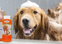 Dog Shampoo For English Toy Spaniel