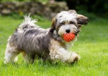 Dog Toys For Havanese (reviews Updated 2020)