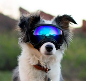Rex Specs Dog Goggles Eye Protection For The Active Dog