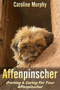 Affenpinscher Owning & Caring For Your Affenpinscher Kindle Edition