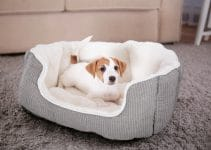 Best Dog Beds For Beaglier