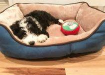 5 Best Dog Beds for Bernedoodles (Reviews Updated 2021)