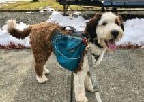 Best Dog Collar For Bernedoodles (1)