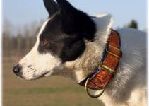 Best Dog Collar For Canaans