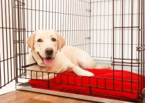 Best Dog Crate For Canaans