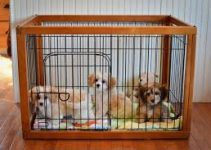 5 Best Dog Crates for Cavachons (Reviews Updated 2021)