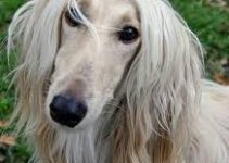 Best Dog Crates For Afghan Hounds