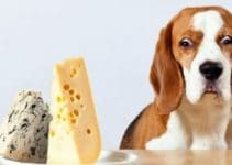 5 Best Dog Foods with Cheese (Reviews Updated 2021)