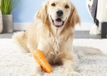 5 Best Dog Foods with Carrots (Reviews Updated 2021)