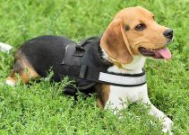 5 Best Dog Harnesses for Beagliers (Reviews Updated 2021)