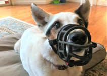 Best Dog Muzzle For Beaglier