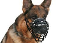 Best Dog Muzzle For Belgian Malinois