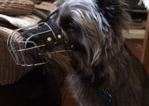 5 Best Dog Muzzles for Cairn Terriers (Reviews Updated 2021)