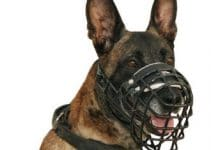 5 Best Dog Muzzles for Belgian Sheepdogs (Reviews Updated 2021)