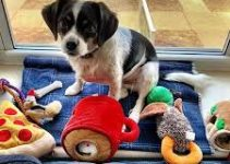 5 Best Dog Toys for Beagliers (Reviews Updated 2021)