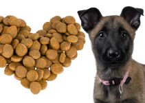 Best Puppy Food For Belgian Sheepdogs