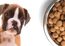 Best Puppy Food For Boxadors
