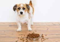 Best Wet Dog Food With Gravy