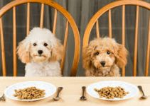 5 Best Wet Foods to Mix with Dry Dog Food (Reviews Updated 2021)